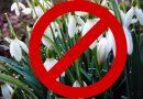 Операція «Первоцвіт-2021»: у Вінниці боротимуться зі стихійною торгівлею квітами