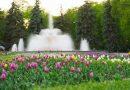 У Центральному парку Вінниці розквітло 40 тисяч тюльпанів