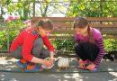 У селі на Вінниччині оселилося більше сотні лелек